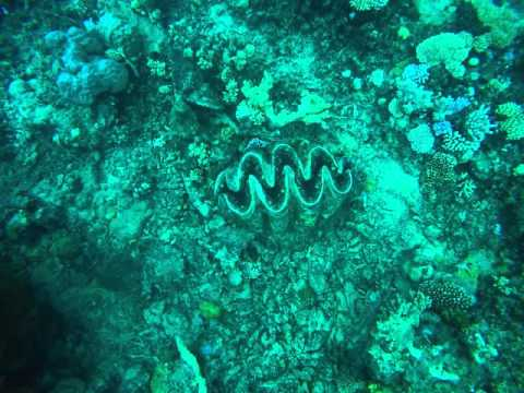 Giant Mollusc