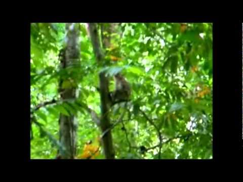 Rainforest Asia Fenixtrip