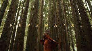 Perennial | Panasonic GH5 Short Film