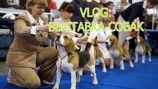 VLOG: выставка собак l Даша Денисова, Polina Line, Katya Mew, Паня