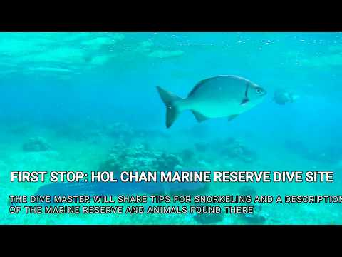 Hol Chan Marine Reserve: Snorkeling Tour in Belize