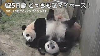 Cute Panda ☆ #61 癒しの親子はどちらもマイペース♪ 8月11日の映像 お転...