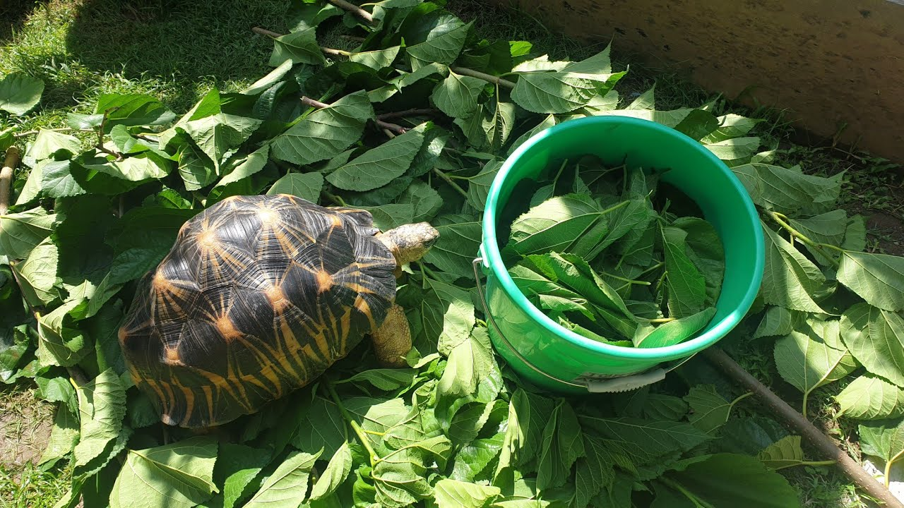 Tortoise Care in the Philippines