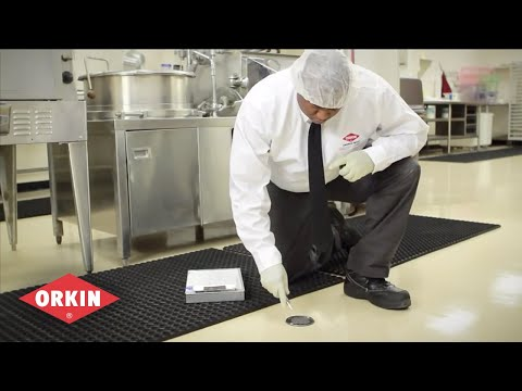 Where To Look For Signs Of Pests - Orkin For Your Business