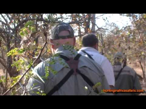 Cape buffalo hunting video South Africa