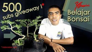 500 Subscriber Giveaway - Bagi Bagi Bahan Bonsai Kawista