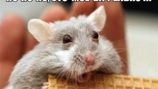 Прикольные картинки РУнета #1(Прикольные картинки РУнета #1 Веселые картинки на youtube., 2016-08-18T10:56:09.000Z)