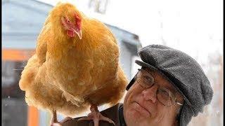 Funny Joke Man Brings Chicken Into Movie Theatre{V}
