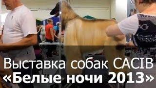 Выставка собак CACIB ''Белые ночи'' 29 и 30 июня 2013 г Экспоцентр Гарден Сити