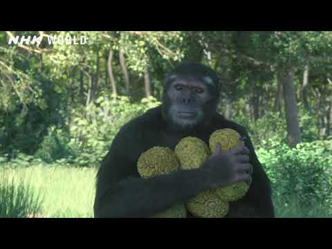1. Prehistoric Family Life - OUT OF THE CRADLE [人類誕生CG] / NHK Documentary
