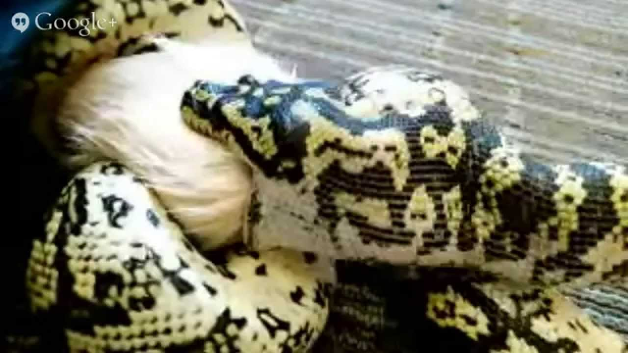 what behavioral adaptations help snakes survive