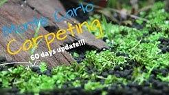 NO CO2 - Monte Carlo I 60 days Carpet Update!!