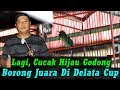 Bulu Sayap Copot  Lembar Cucak Hijau Godong Hatrick Di Delata Cup  Sukoharjo  Mp3 - Mp4 Download