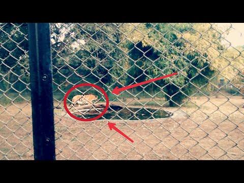 Maharajbag ZOO Nagpur   Nagpur Zoo
