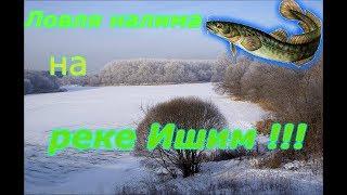 Ловля налима на реке Ишим!!!