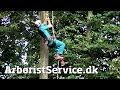 Rope Walking Setup with Petzl Croll and Pantin (DRT) - Tree Climbing Arborist