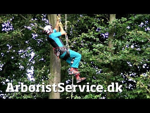 Rope Walking Setup with Petzl Croll and Pantin (DRT) - Tree Climbing Arborist