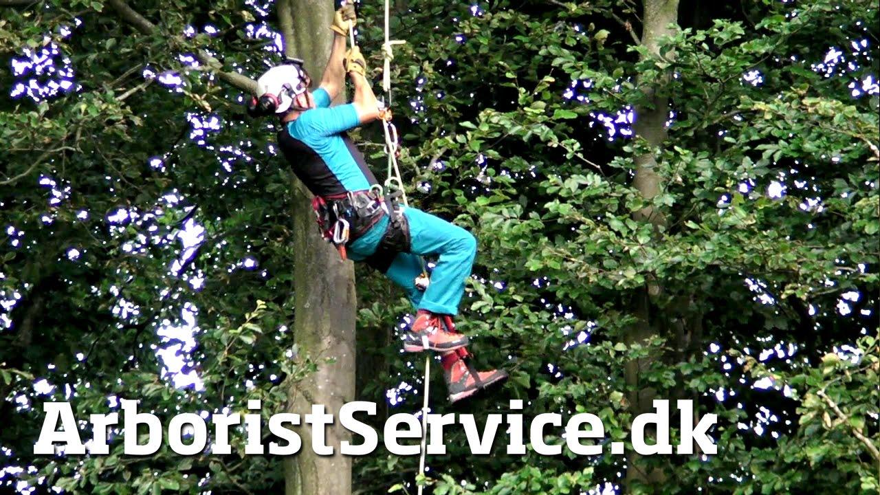 974c01c227e Rope Walking Setup with Petzl Croll and Pantin (DRT) - Tree Climbing ...