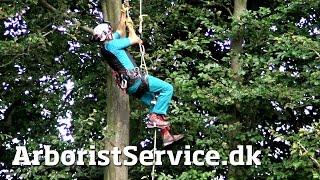 Video Rope Walking Setup with Petzl Croll and Pantin (DRT) - Tree Climbing Arborist download MP3, 3GP, MP4, WEBM, AVI, FLV Desember 2017