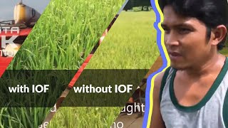 Instalink - Insta Organic Farm Enhanced Microbial Inoculant on RICE FARM