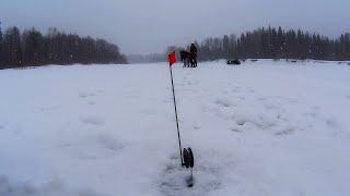 Рыбалка на щуку Жерлицы