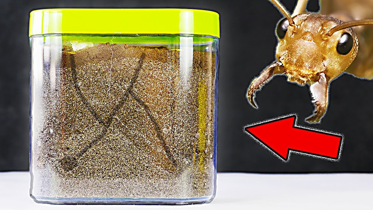 How To Make Ant Farm Youtube