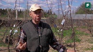 Прививка плодово-ягодных деревьев. Советы заслуженного агронома