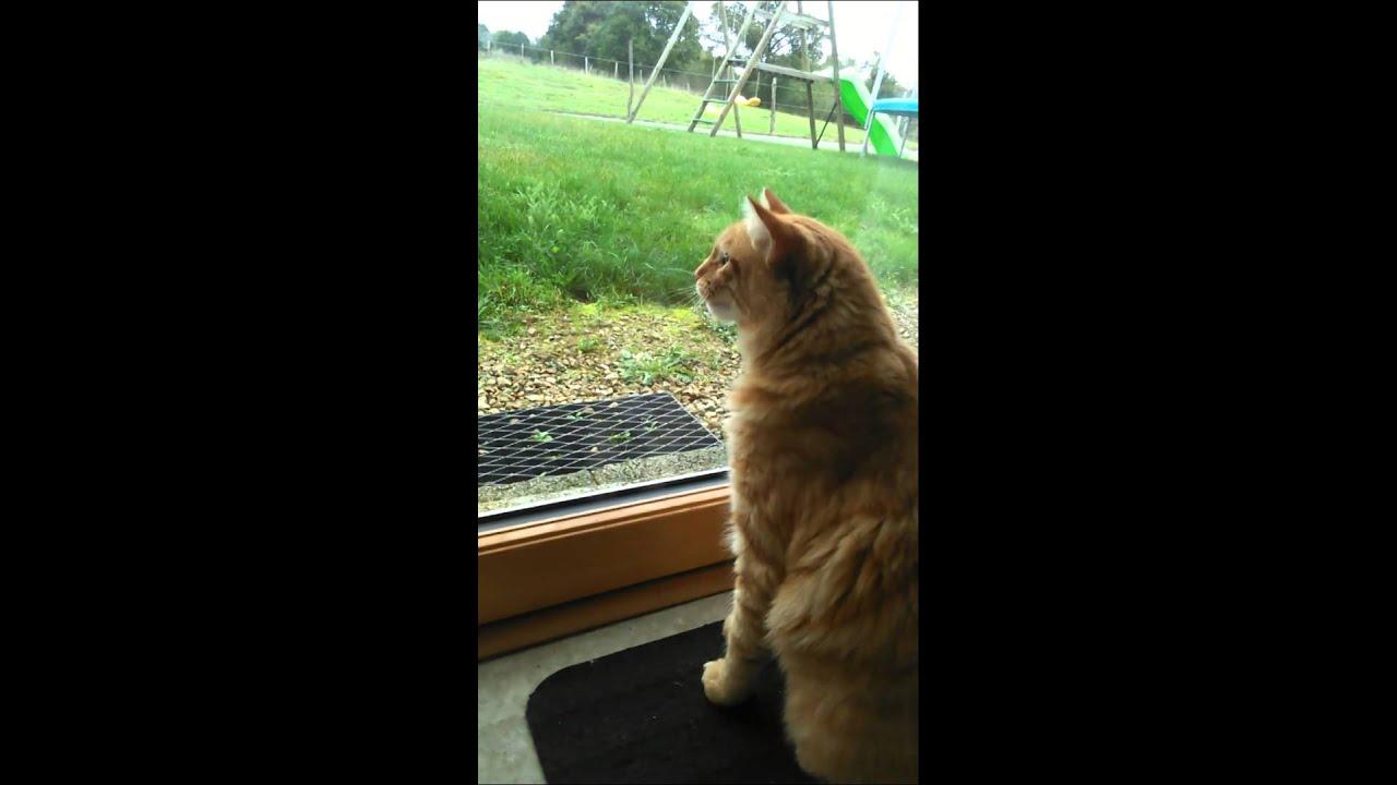 Youtube Cat Eye Tutorial: Chat Frustré / Frustrated Cat