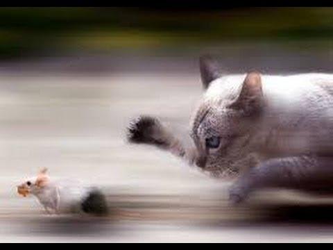 😼 Kedi Vs Fareler - Ratty And Catty (Türk Oyunu ) 😺