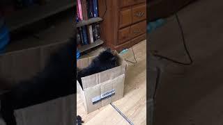 Funny cat jump