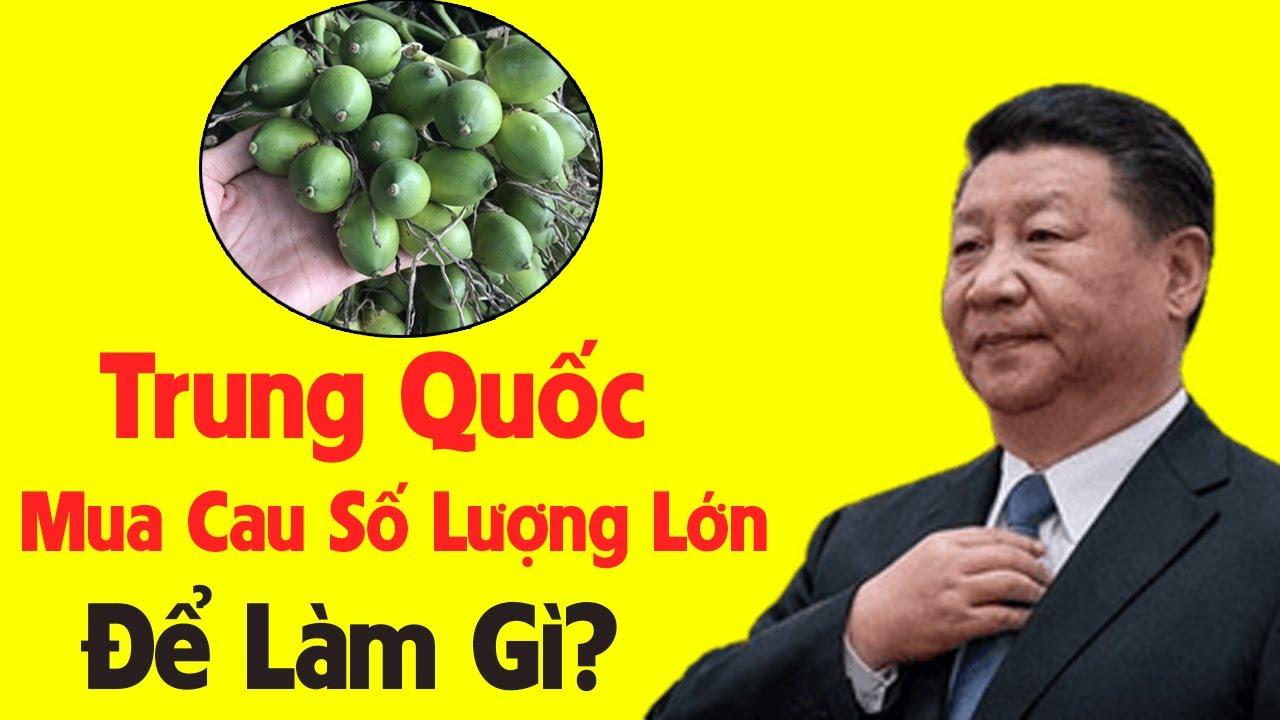 Download Trung Quốc Mua Cau Tươi Số Lượng Lớn Của Việt Nam Về Để Làm Gì
