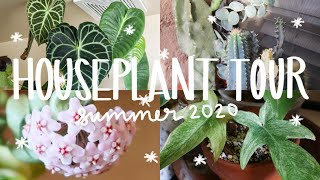 HOUSEPLANT TOUR SUMMER 2020! | My Entire Houseplant Collection