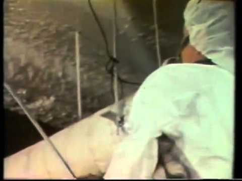 asbestos-control-encapsulation-1978-nyc-public-schools