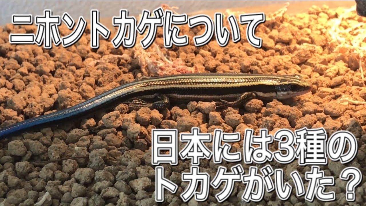 トカゲ 種類 日本