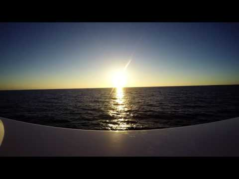 Bull Sharks In Cay Sal Sunset