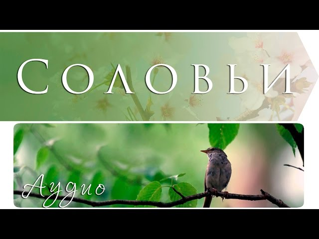 Изображение предпросмотра прочтения – ЕленаДмитренко читает произведение «Соловьи» (Дудин Михаил)