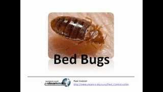 Flea Control Pest Bed Bugs