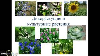 Дикорастущие и культурные растения
