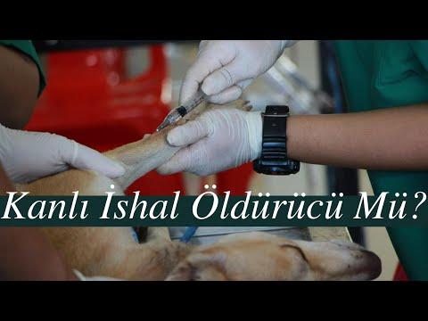 Köpeklerde Kanlı İshal (Parvo Virüs) Hastalığı
