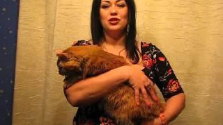 Женщина-кошка: мурчим!