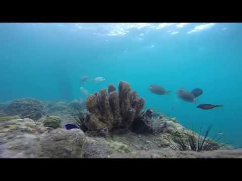 Study Relax Sleep | Caribbean Sea, Fish and, Coral | White Noise