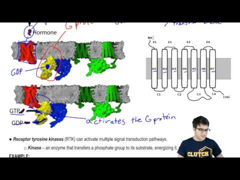 G Protein Coupled Receptors and Receptor Tyrosine Kinases