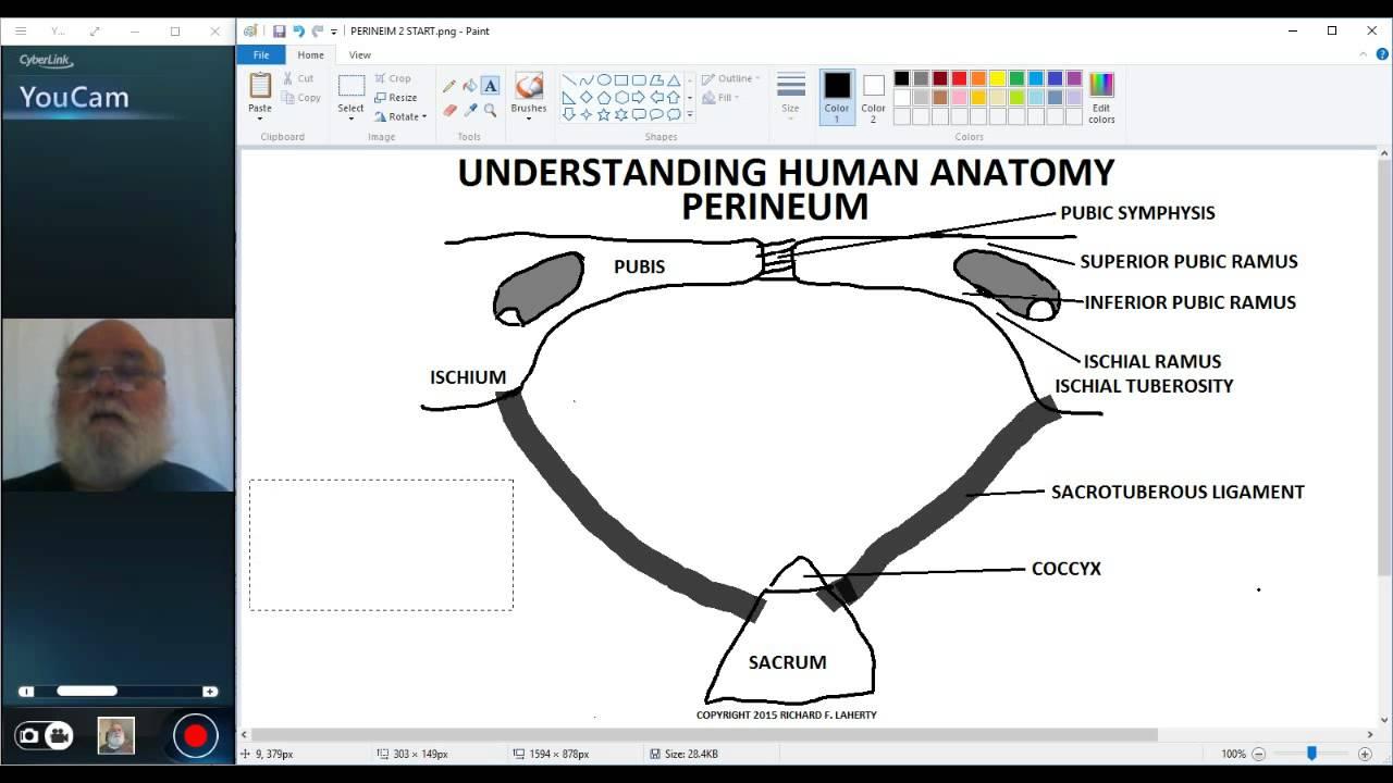 UNDERSTANDING HUMAN ANATOMY-PERINEUM PART 1 - YouTube