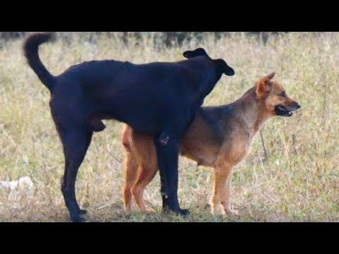 Top 3 Video Summer Rural Dog Meeting In Middle Village