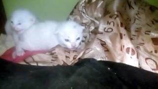 Бешеные котята ШИПЯТ😱