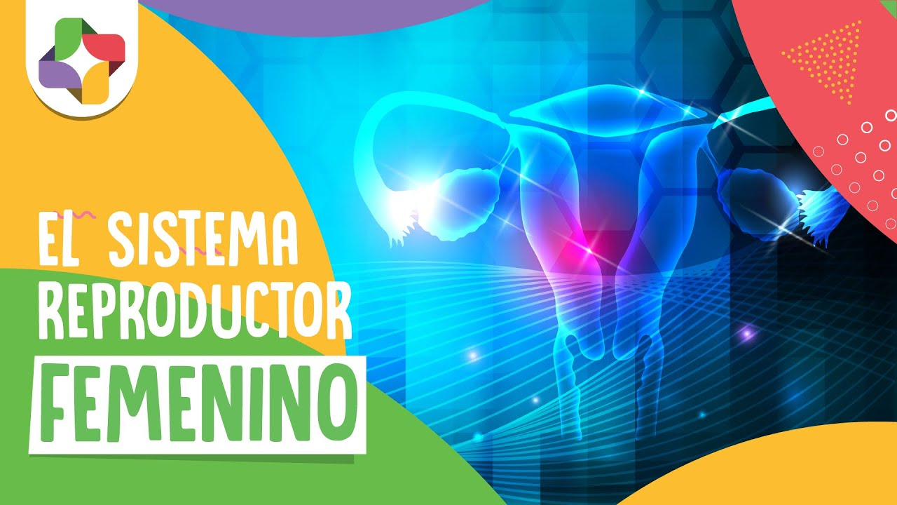 Sistema reproductor femenino - Biología - Educatina - YouTube