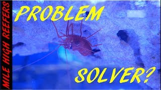 Dealing With Problems, Aiptasia and Cyanobacteria