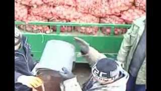 На посадке картошки Молдоване
