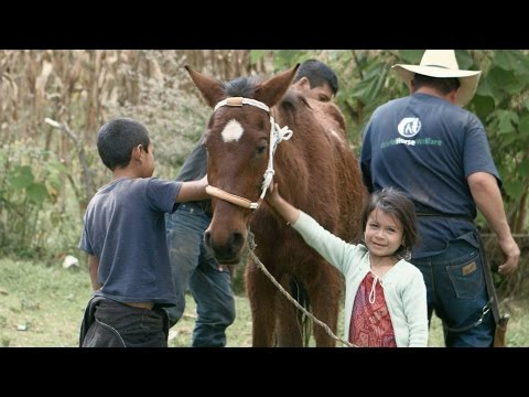Creating a better future for Guatemala's working horse communities