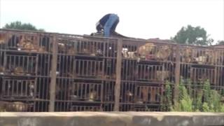 China Dog Truck Rescues 905 & 907